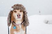Dog wears a winter hat