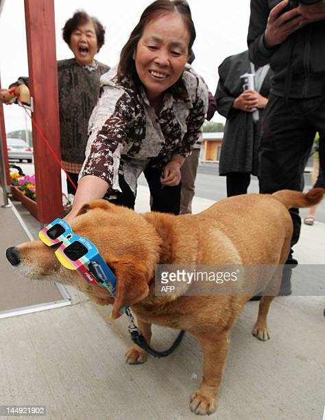 A dog wears special glasses to view a solar eclipse at Koriyama city in Fukushima prefecture northern Japan on May 21 2012 Millions turned their eyes...