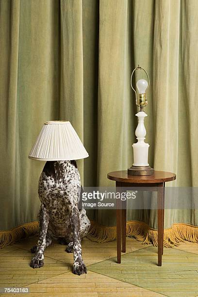 Dog with a lampshade on its head