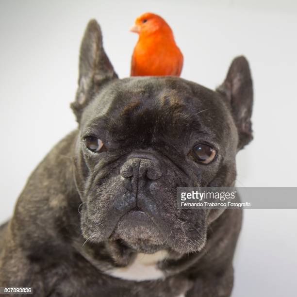 Dog with a small red bird on top of his head. Animal friends
