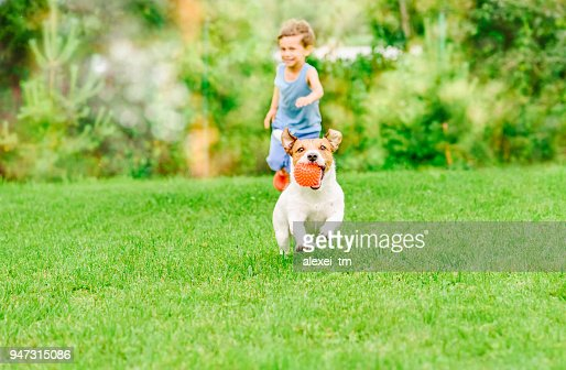 Dog with ball in mouth runs from kid playing chase game at summer lawn : Stock Photo