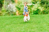 Jack Russell Terrier playing with child boy at bright day