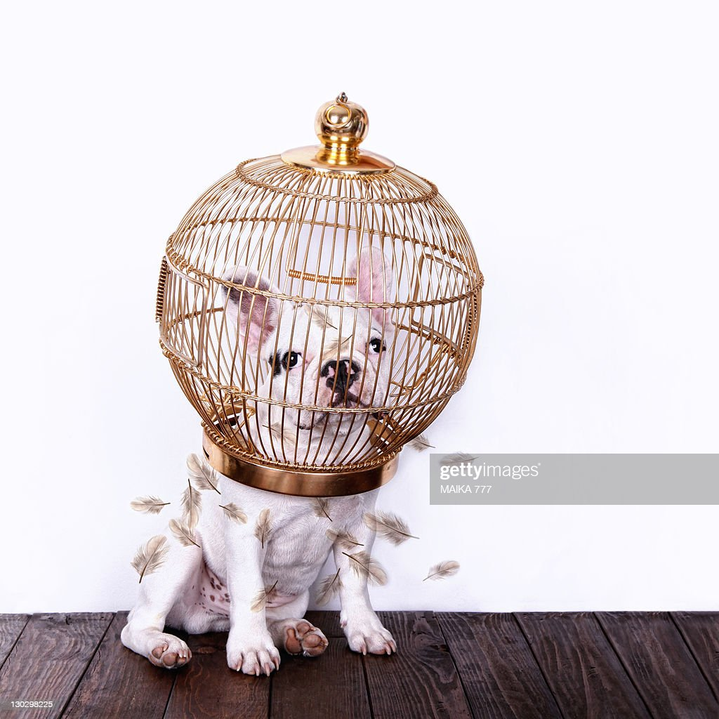 Dog with bird cage : Stock Photo