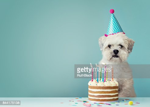 Dog with birthday cake : Foto de stock