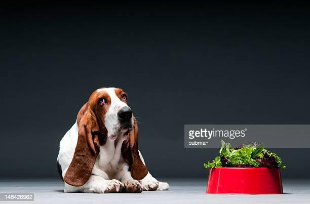 Cão com recipiente da alface