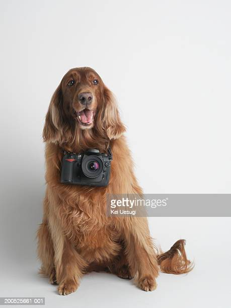 Dog with camera around neck