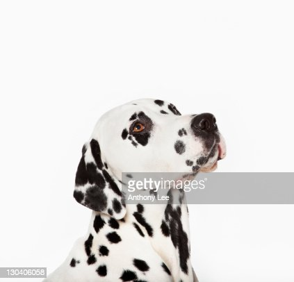 Dog with curious expression : Stock Photo