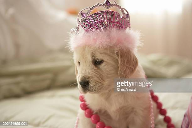 Dog with decorations on bed