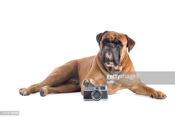 Dog with film camera