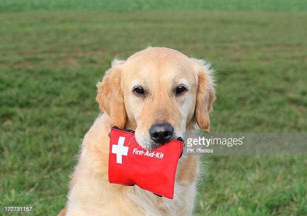 Dog with First-Aid-Kit