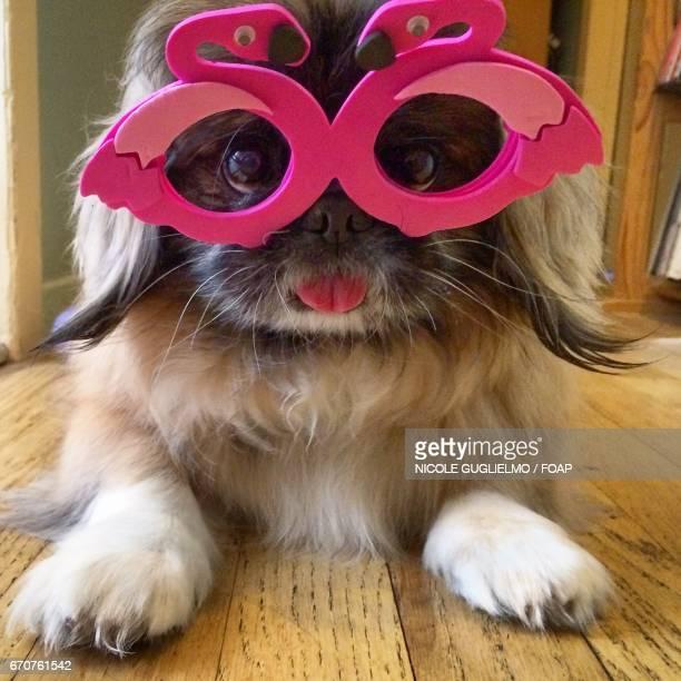 Dog with flamingo shades