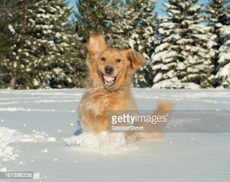 Hund mit lustigen Gesicht im Schnee : Stock-Foto