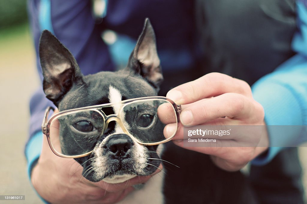 Dog with glasses : Stock Photo