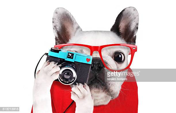 Dog with glasses taking a picture