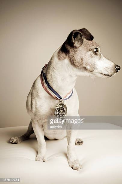 Dog with Gold Medal