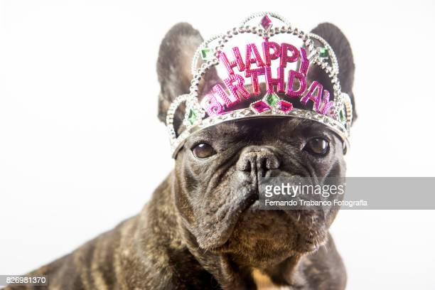Dog with happy birthday crown