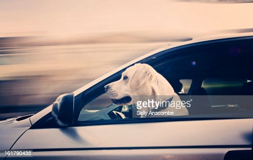 Dog Peering From Hole In Rear Of Car Stock Photo Getty Images
