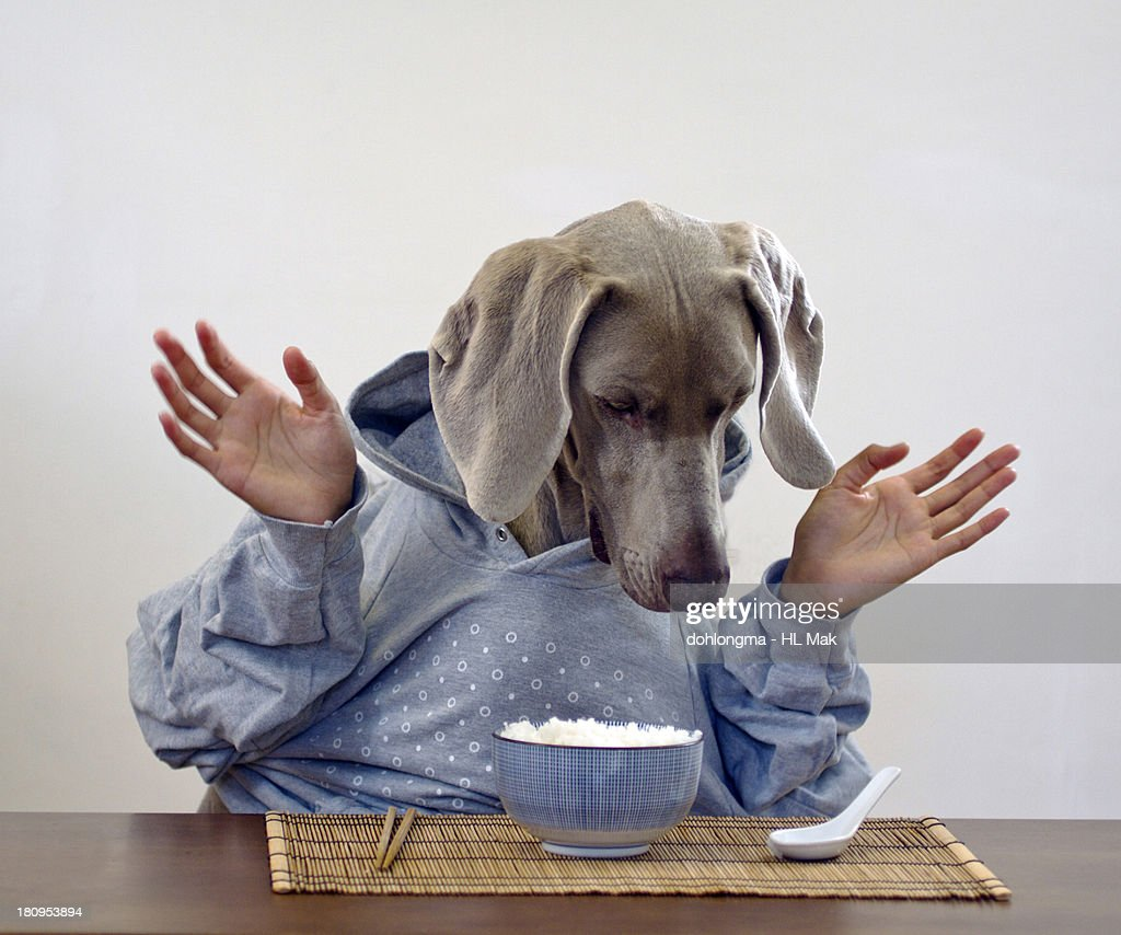 Dog with human hands surprised by a bowl of rice : Stock Photo