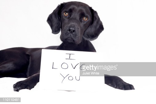 Dog with I love You Message : Stock Photo