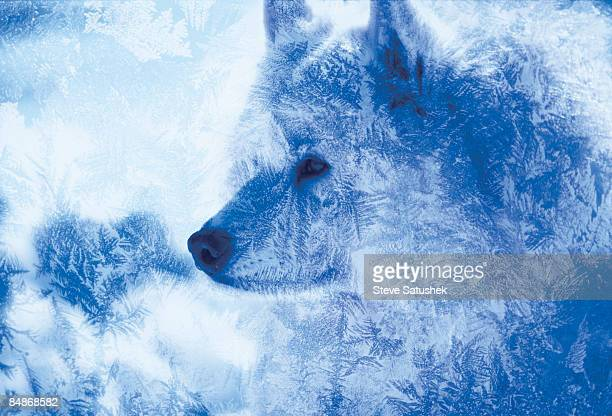 Dog with ice