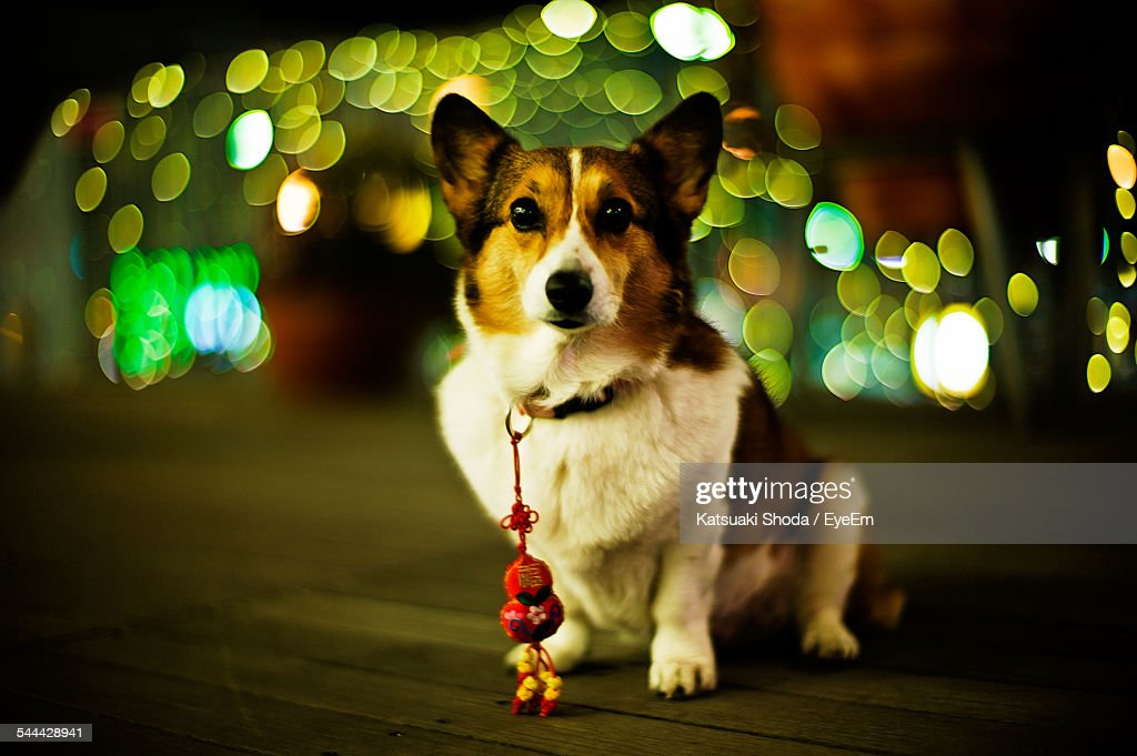 Dog With Knick Knack On Collar