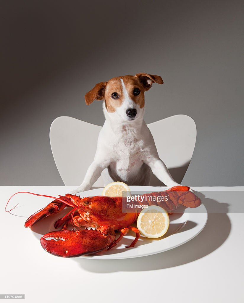 Dog with lobster dinner : Stock Photo