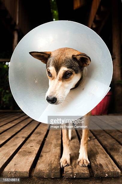 Dog with medical cone collar