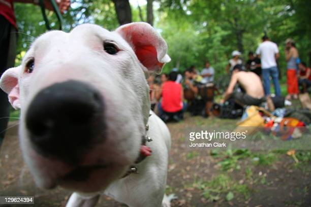Dog with nose in camera