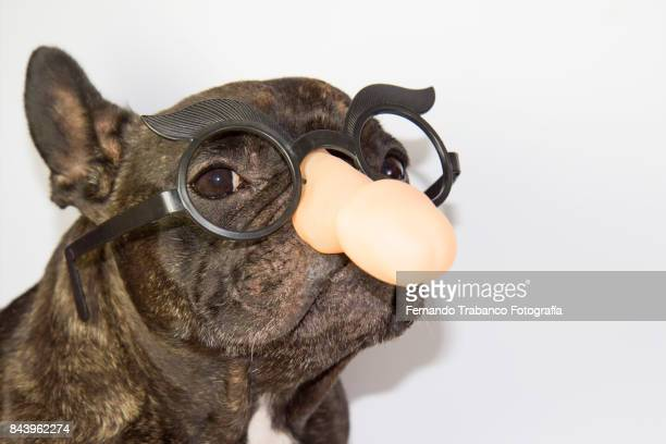 Dog with penis shape glasses