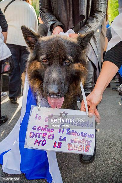 A dog with placard during a protest against the media and the attacks on Israelis
