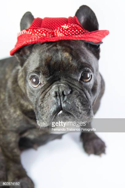 Dog with red hat