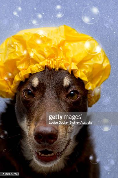 Dog with showercap and bubbles