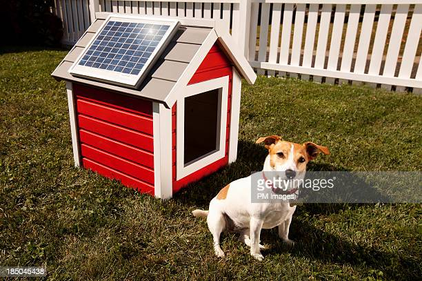 Dog with solar panel on dog house