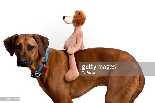 Dog with stuffed animal : Stock Photo