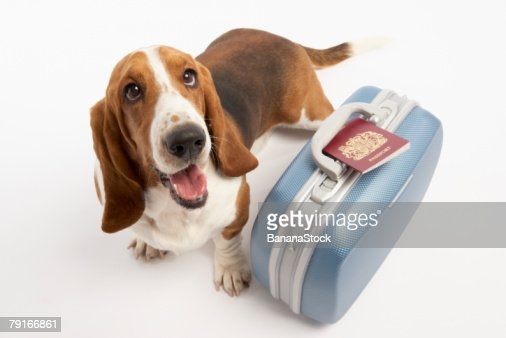Dog with suitcase and passport : Stock-Foto