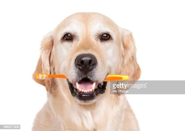Cane con spazzolino da denti