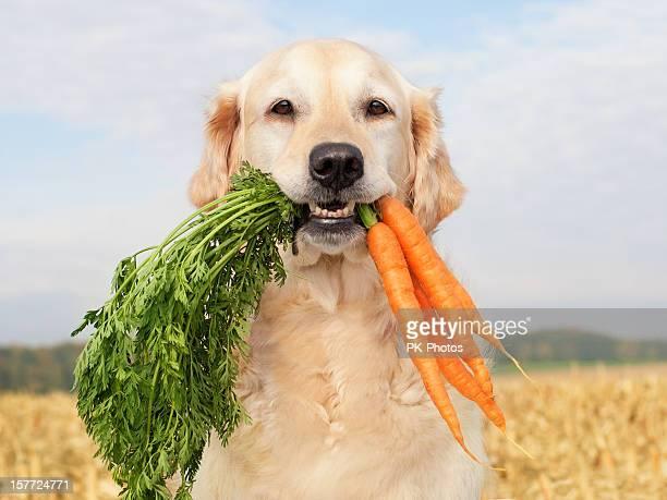 Cão com produtos hortícolas