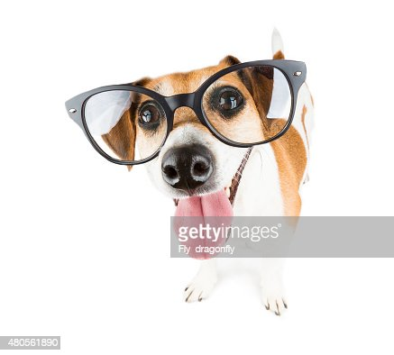 Dog with vision glasses : Stock Photo