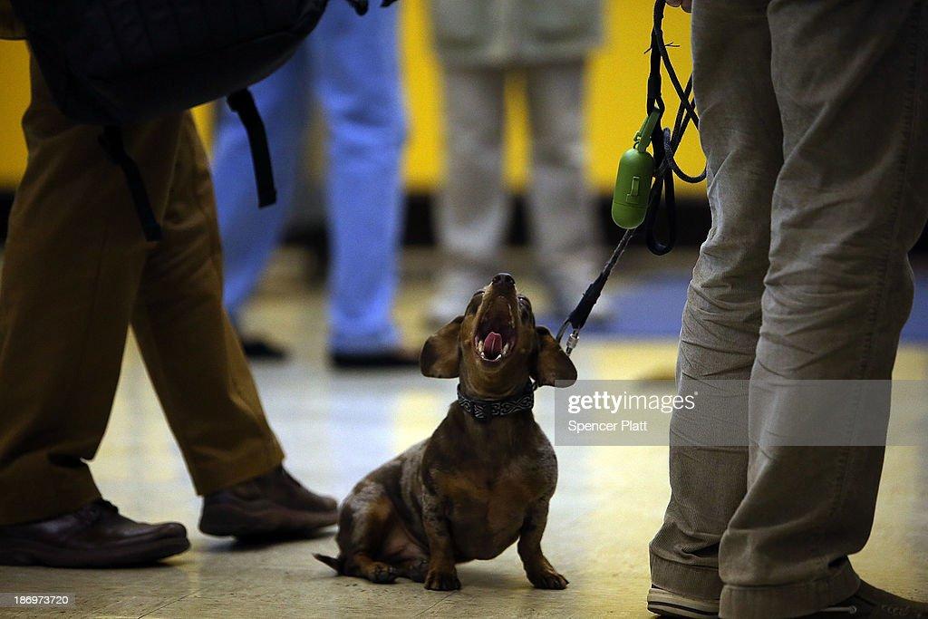 A dog yawns while waiting for its owner to vote on Election Day on November 5, 2013 in the Brooklyn borough of New York City. New York Democratic mayoral candidate Bill de Blasio is running against Republican mayoral candidate Joe Lhota in a highly anticipated mayoral campaign.