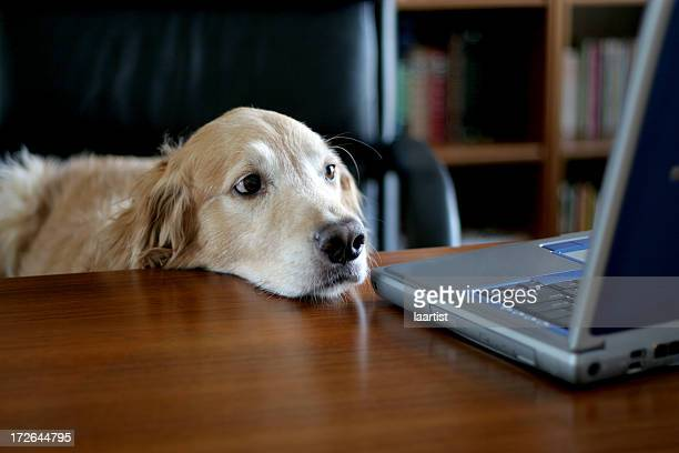 Doggie Executive.