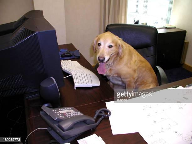 Doggie Executive