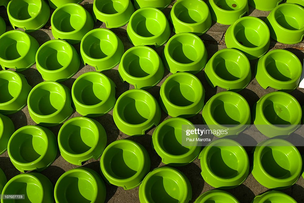 Doggie Food Bowl Heaven : Stock Photo