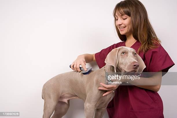 Doggie Grooming