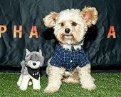ALPHA - Bring Your Own Dog (BYOD) Screening In LA