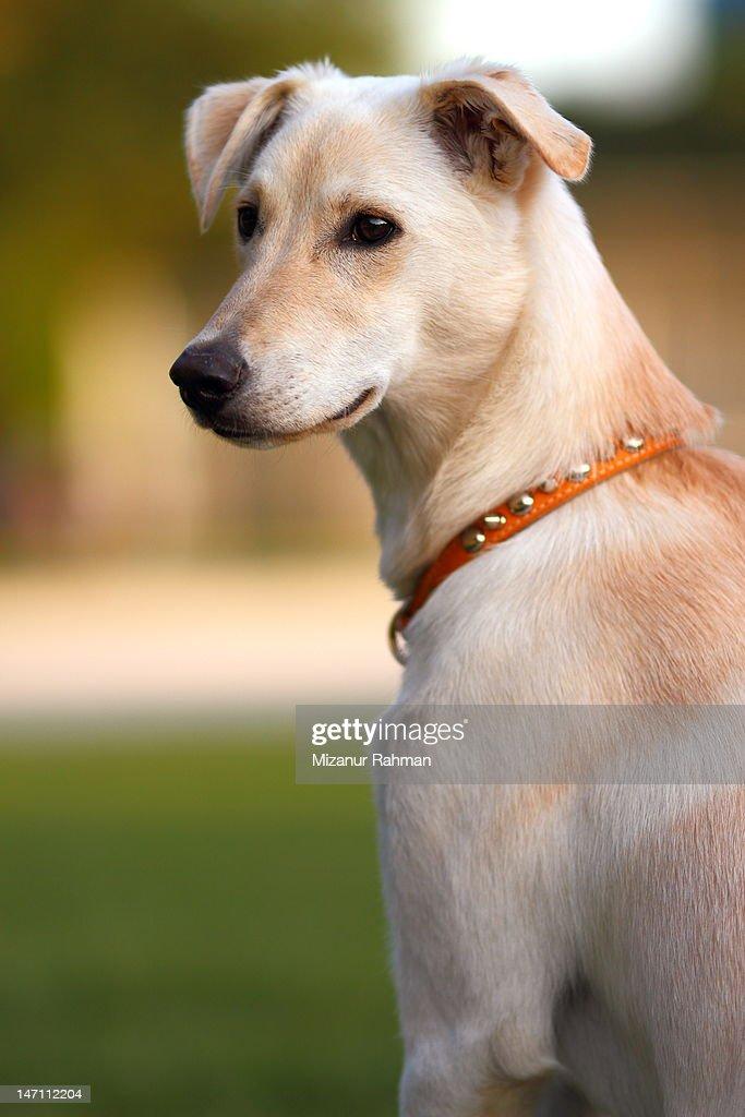 Doggie Portrait : Stock Photo