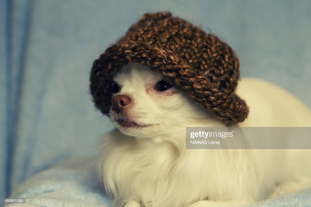 Doggy hat : Stock Photo