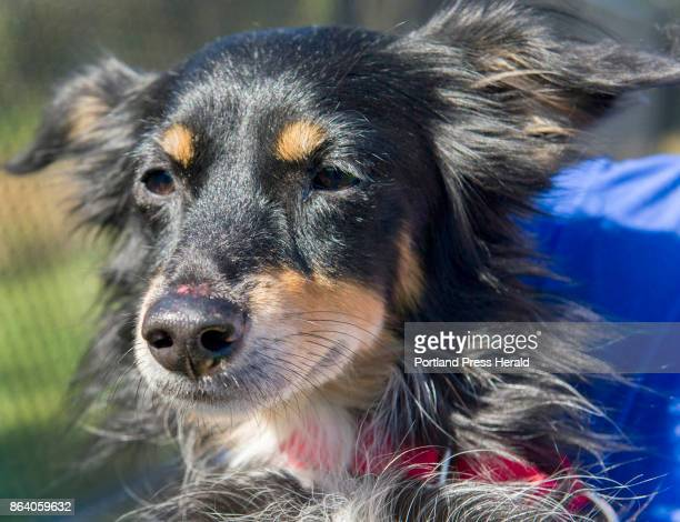 25 dogs and one cat arrived at the Animal Refuge League of Greater Portland Thursday morning following a long flight from Puerto Rico The Puerto...
