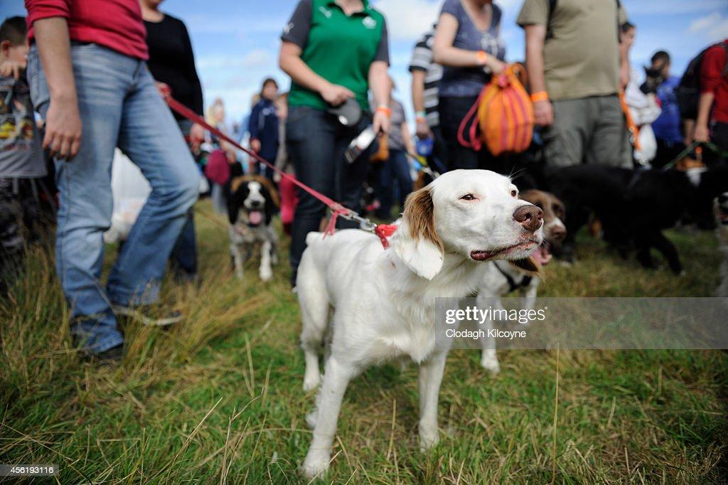 Dog Show Dublin September