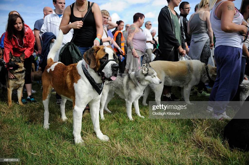 Dogs at the Guinness World Record for the largest dog obedience ...