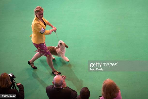 Dogs are judged in a show ring on the first day of Crufts Dog Show at the NEC Arena on March 09 2017 in Birmingham England First held in 1891 Crufts...